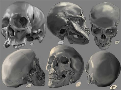 skull drawing reference  sketches  artists