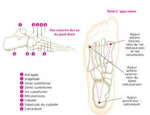 douleur sur le cote exterieur du pied anatomie et probleme du pied
