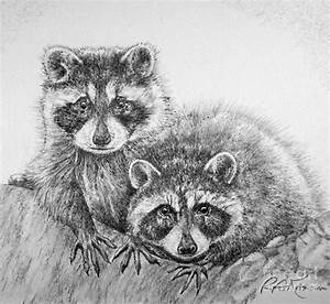 Raccoon Pals Drawing by Roy Anthony Kaelin