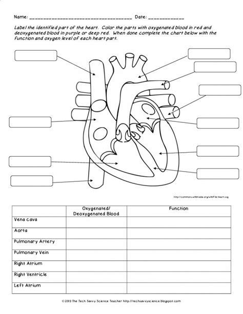 Human Anatomy Labeling Worksheets Human Body System Labeling Worksheets Lesson Plan Syllabuyco