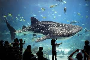 largest aquarium in the us best aquarium photos