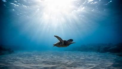 Turtle Underwater Sea Swimming Turtles Animals Sand