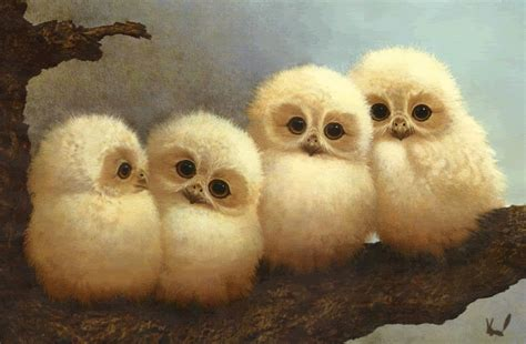 countertop copper lazy baby owls gif by emerald1927 photobucket