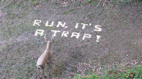 My aunt asked my uncle to put some corn down for the deer  : funny