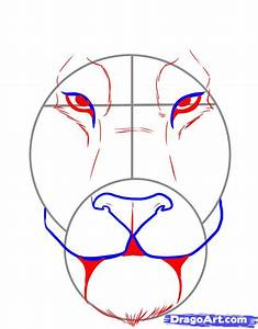 How To Draw A Tiger Face  Step By Step  Rainforest Animals