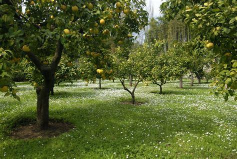 association cuisine citronnier planter et entretenir ooreka