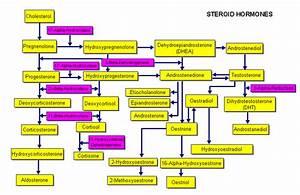 Estradiol Level Chart How 39 S Wild Yam Cream Works