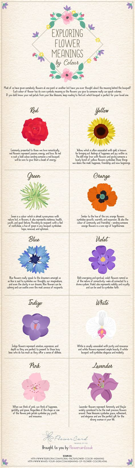 flower color meanings exploring flower meanings by colour infographic