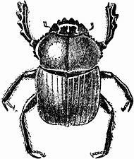 Dung Beetle Clip Art