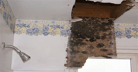 signs  mold sickness