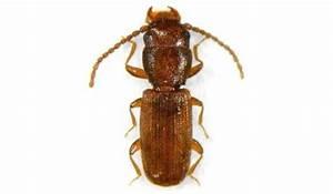 Larve Mite Alimentaire : les insectes de produits stock s pest solution services ~ Nature-et-papiers.com Idées de Décoration