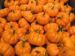 Pumpkin, Free, Stock, Photo, Image, Picture, Halloween, Mini, Pumpkins, Royalty