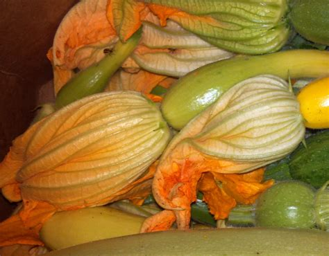 Zucchini Squash Blossom Recipes