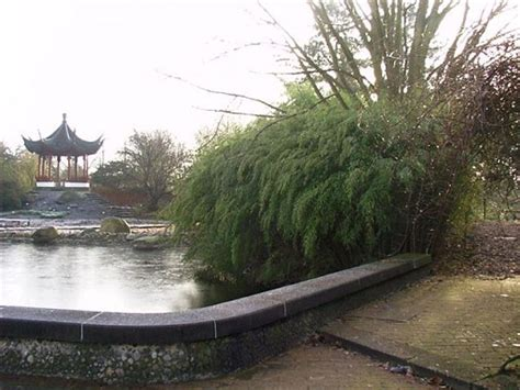 Neuer Botanischer Garten Kiel öffnungszeiten by Bambus Vom Limhorn