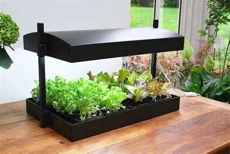 growing flowers indoors luz artificial para plantas de interior