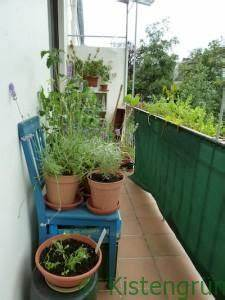 Wann Ist Knoblauch Reif : bl tenendf ule wenn tomaten faulen ~ Lizthompson.info Haus und Dekorationen