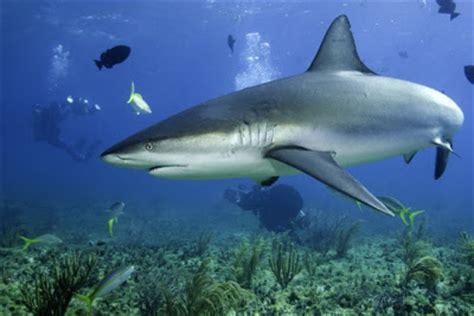 ecran de veille aquarium 3d gratuit 100 astuces ecran de veille pr 233 dateurs marins