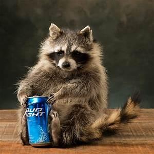 Beer Can Racoon