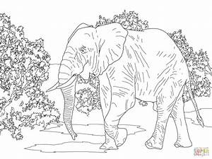 African Forest Elephant Walking coloring page | Free ...