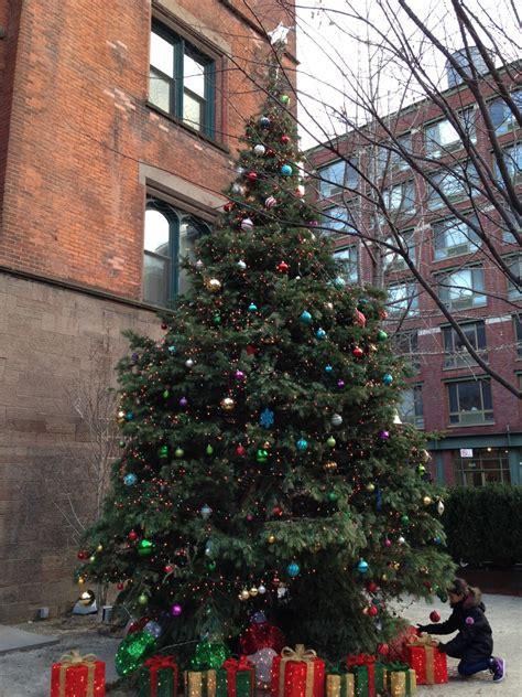 gallery of christmas tree farm massachusetts perfect