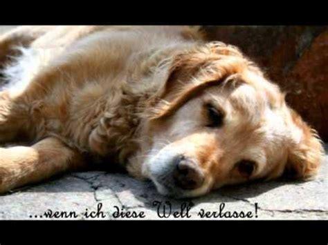 abschied nehmen ein hund erzaehlt vom tod youtube