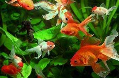 fish aquarium   remedial measure  vastu defect