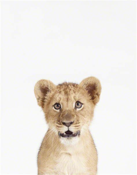 holy cute baby animal prints  sharon montrose wantist