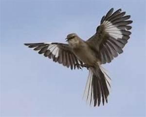 Main Events Of To Kill A Mockingbird Timeline