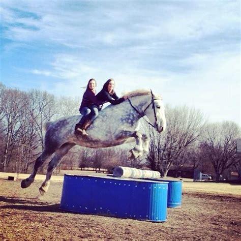 horse horses draft percheron jumping breeds riding appaloosa wow funny stallion