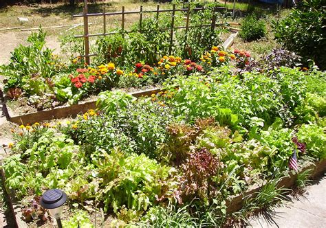 bed garden raised bed gardening wikipedia