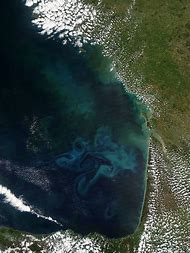 Phytoplankton Bloom From Space