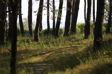 SKYGARDEN - Priežu mežs - SKYGARDEN