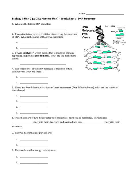 worksheet 1 dna structure answers worksheet dna molecule and replication worksheet grass