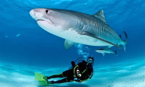 top 5 destinations for scuba diving with sharks aquaviews