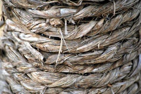 tali rami hemp rope by yukesh vikings cultivated cannabis ancient origins