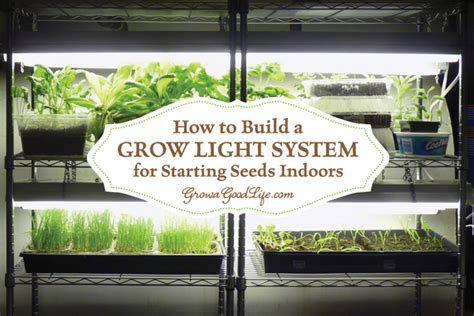 grow light setup how to set up a growing area for starting seeds indoors