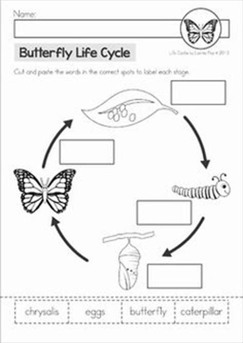 cycle worksheets 1st grade science stages in the