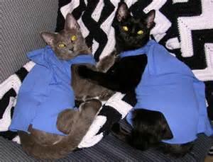 cat cone alternatives alternatives to elizabethan collars up pet project