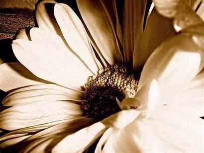 Flowers Flower Digital Damaris Beauty Hhs