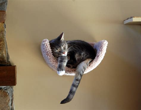wall mounted scooped beds fundamentally feline