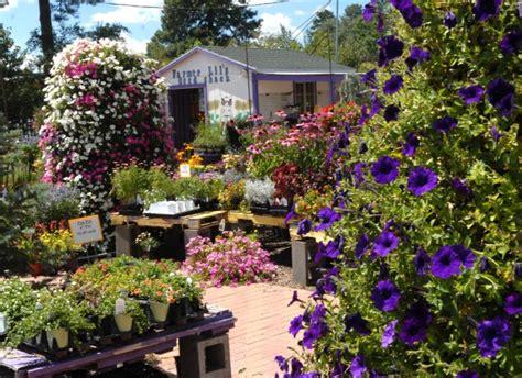 viola s flower garden blooms in flagstaff local