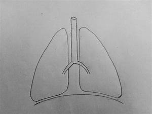 How To Draw Lungs Diagram