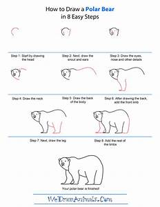 polar animal directed draw - Google Search | Directed ...
