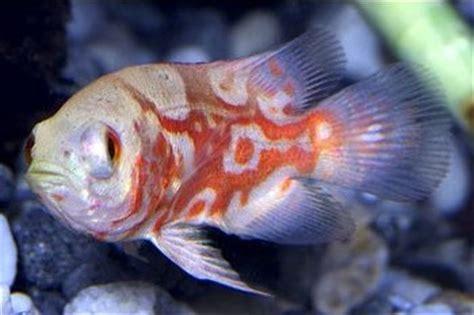 types  freshwater aquarium fish  pets central