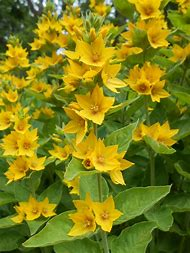 Best 25 ideas about flower names find what youll love yellow flowers names and pictures mightylinksfo