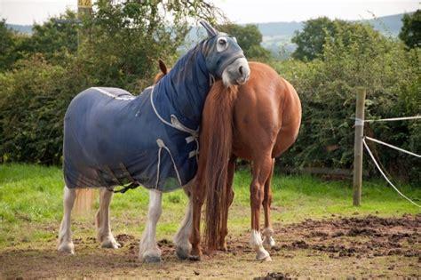 sommerekzem pferd symptome behandlung fuetterung ewalia