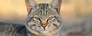 Katzen Fernhalten Von Möbeln : die geschichte der katzen teil 2 domestikation katzen ~ Michelbontemps.com Haus und Dekorationen