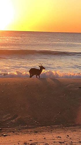 Explorejeffersonpacom  Say What?! Deer Spotted Swimming