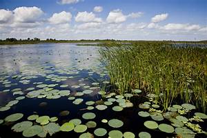Video Saving Lake Okeechobee Audubon