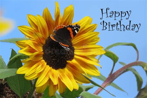 happy birthday card stock photo image  butterfly